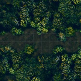 Photo Realistic Forest large